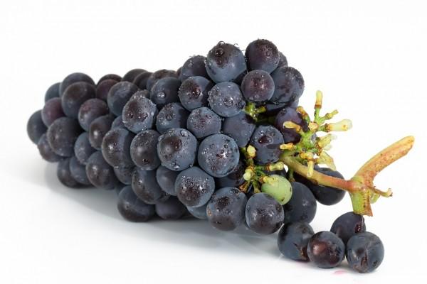 Weintrauben Blau KG