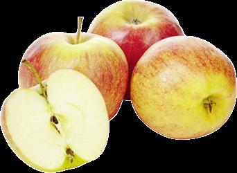 Apfel Jonagold KG