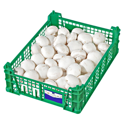 Pilze 3 Kg Kiste