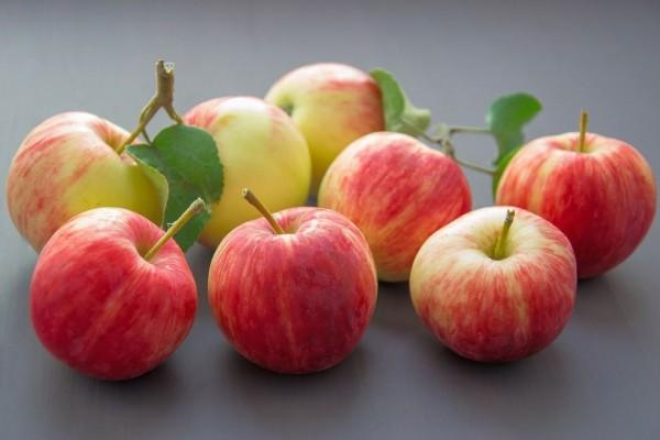Apfel Royal Gala KG